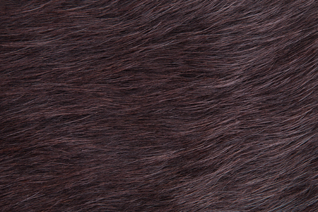 Fur young plush cow close-up