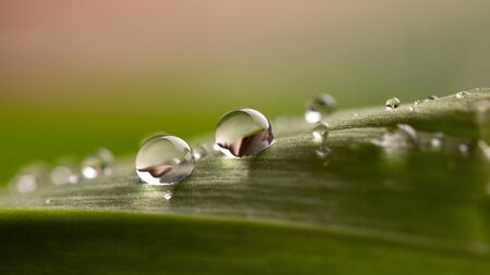 Water drops on a green leaf close up.