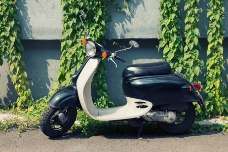 Moped with a retro design on the background of the wall covered with green leaves.