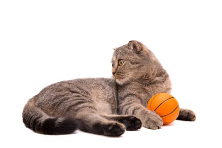Gray cat with a small basketball. Isolate on white background.