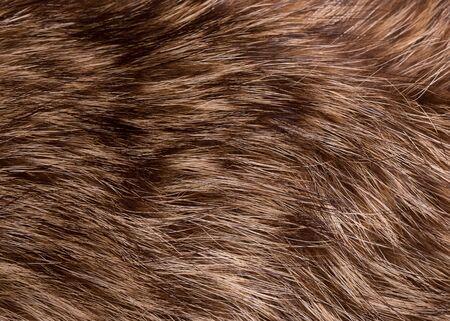Natural raccoon fur close up. Stok Fotoğraf