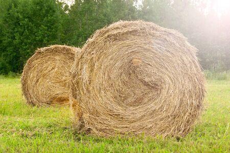 Round billets of hay in nature.