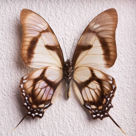 Collectible butterfly close-up. Stok Fotoğraf
