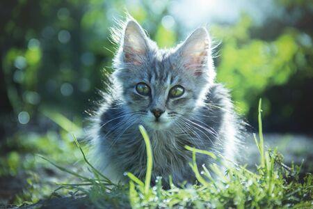 Kitten on the nature close-up. Stok Fotoğraf - 128345944