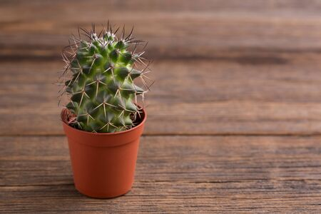 Potted cactus standing on a wooden background. Stok Fotoğraf