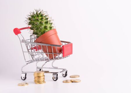 Cute cactus in a little shopping cart. Conceptual shot. Gold coins and cactus on a white background. Stok Fotoğraf