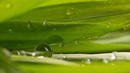 Greens and drops of water. Green leaf close up. Stok Fotoğraf - 128714458