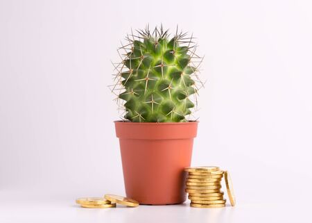 Cactus in a pot and gold coins on a white background.
