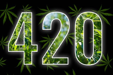 Cannabis leaves on a black background. Figures 420 laid out from hemp leaves. Four-twenty. Conceptual.