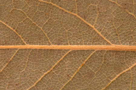 Leaf texture. Drawing on a leaf of a plant.
