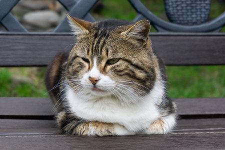 Street cat on a park bench.