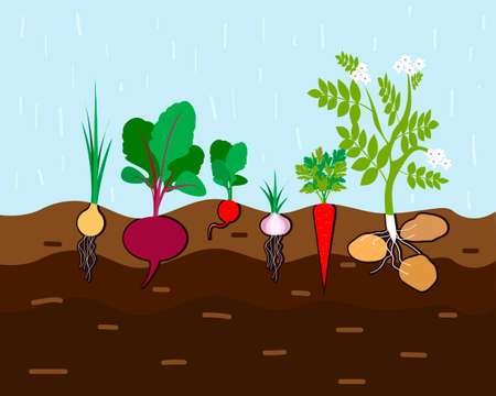 Fresh organic vegetable garden. Set vegetables plant growing underground carrot, onion, garlic, radish, beet, potato. Vector illustration Ilustração