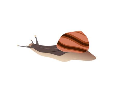 Snail. Side view on a white isolated background. Vector illustration Illusztráció