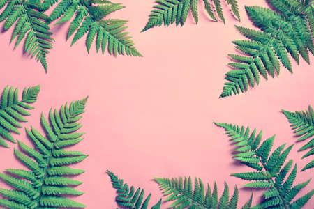 Fondo de verano tropical, hojas de helecho se establecen en el marco alrededor de espacio en blanco para un texto, lay plana, vista desde arriba, foto estilizada Foto de archivo