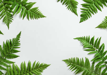 Fern botanical background, view from above, flat lay