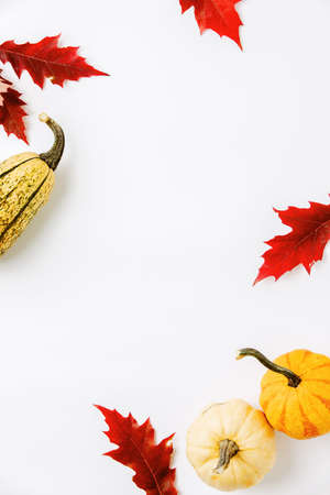 Autumn holidays background with copy space for a greeting text, greeting card or leaflet template 写真素材