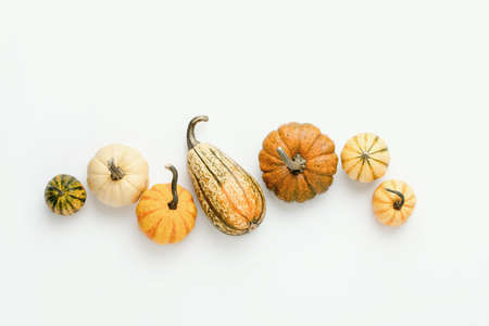 Minimalist fall background with various pumpkins set in a row, autumn concept with blank space for a text