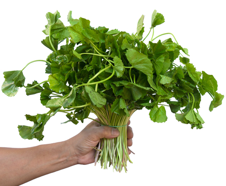 longevity medicine: The plant is very useful To make healthy drinking water. Stock Photo