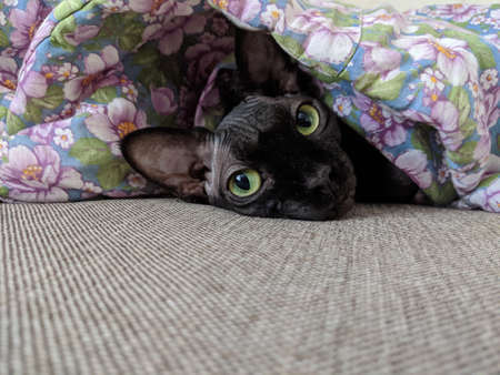 Black Cat under the covers