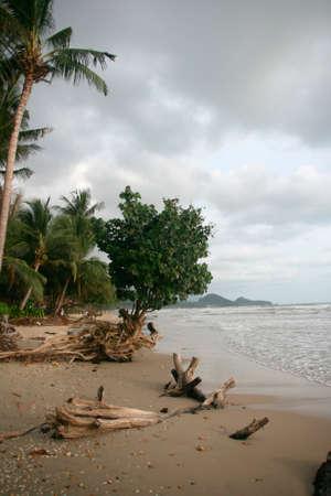 tropical nature sea and trees white sand beach thailand photo