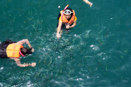 divers feed the fishes in thailand Stock Photo - 1704250