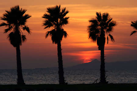 golden sun set and palm trees by the sea photo