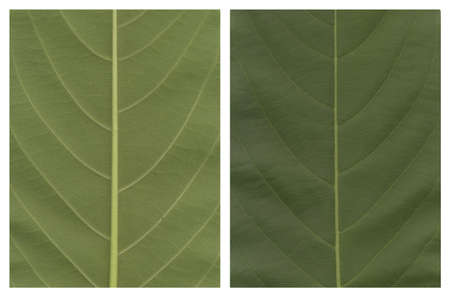the sides: two sides of a leave nature concepts  Stock Photo