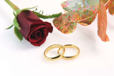 two wedding rings isolated on white with a red rose decoration plant and a little reflection