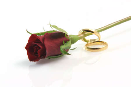 two wedding rings isolated on white with a red rose and a little reflection photo