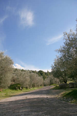 country road path on a shiny day with copy space nature and agriculture concepts photo