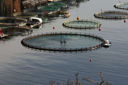 fish farm plant  nature and industry concepts