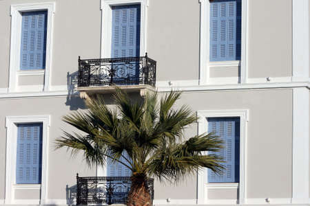 neoclassic: neoclassic house and palm tree for background architecture concepts