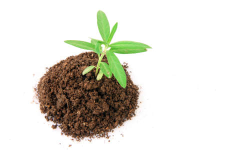 small plant with soil from above isolated on white background