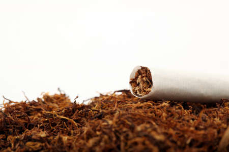 cigarette detail and tobacco crop isolated with copyspace
