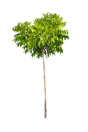 green tree nature isolated on white background Stock Photo
