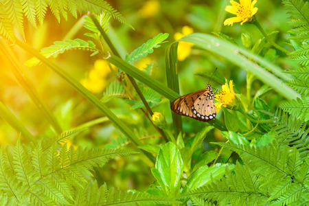 denver botanical gardens: leaf tree and Butterfly on yellow flowers nature background blur focus