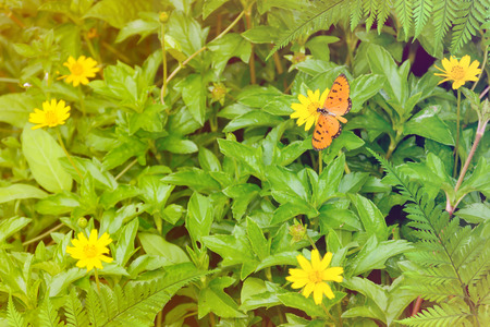 Butterfly on yellow flowers nature background blur focus