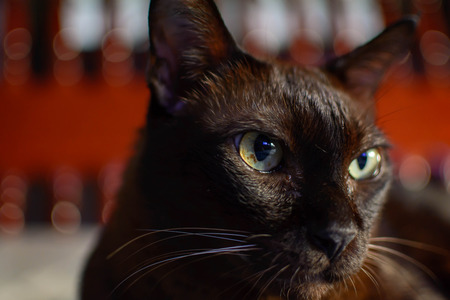 close up animal brown cat sleeping in bed and light bokeh background. selective focus eye and lowkey