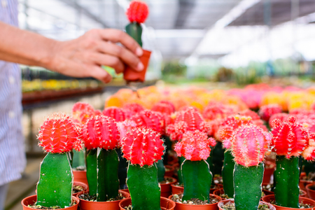 sell: Cactus tree shop with breeding in the house for sale. selective focus
