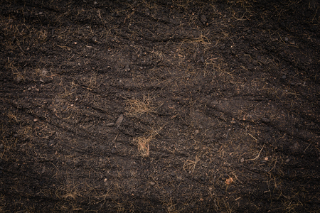 black soil texture and background with plant tree and  natural compost