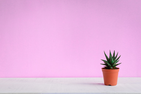 Cactus on the desk with sweet pink walls and minimal pastel style Archivio Fotografico