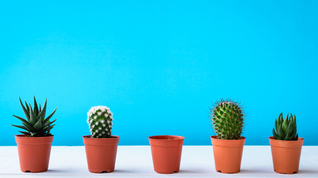Cactus on the desk with sweet blue walls and minimal pastel style