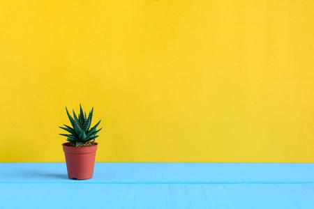 노란색 벽과 최소한의 스타일로 책상에 선인장