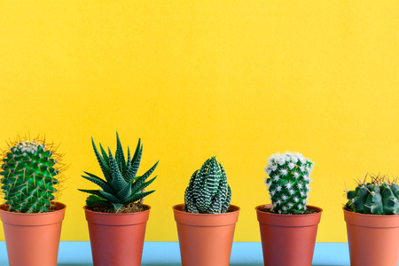 Cactus on the desk with yellow wall and minimal style Reklamní fotografie - 85034444