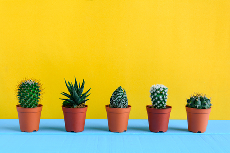 Cactus on the desk with yellow wall and minimal style Stock Photo - 85927125