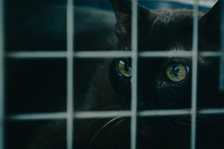 close up black cat in cage with gloom dark and selective focus