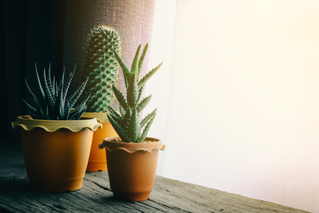 green cactus on table with dark style