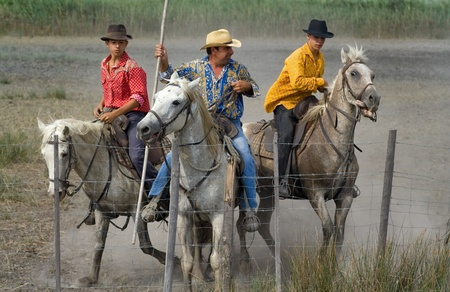 Camargue, France - August 19, 2008: Guardians (Camargue cowboys) after Bull racing. The Guardians and their horses have to keep in a tight know to prevent the bull using its horns, and the horses are trained to stay close together. The skills, teamwork an