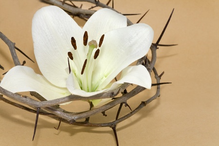 good friday: Crown of Thorns and Easter white Lily on  Beige background