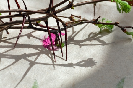 Crown of Thorns with green leaves on paper Background photo